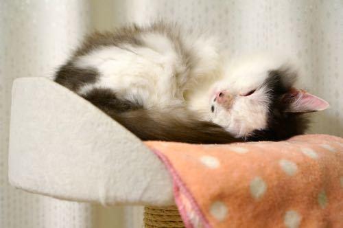 セロタワー寝顔