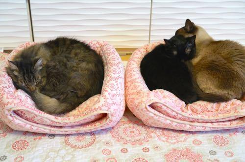 オープンベッド人気