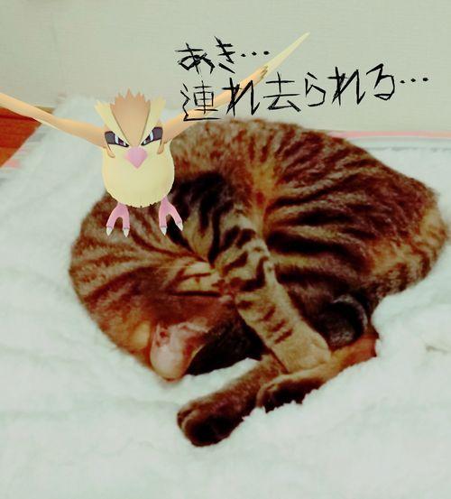 あきポケモン