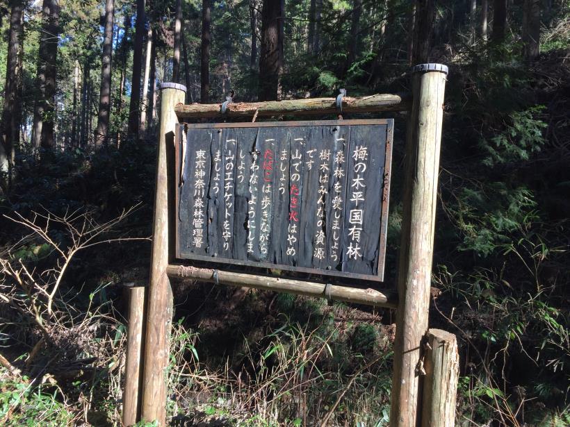 minenoyakushi123.jpg