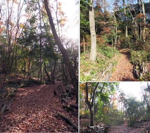 161208林の道