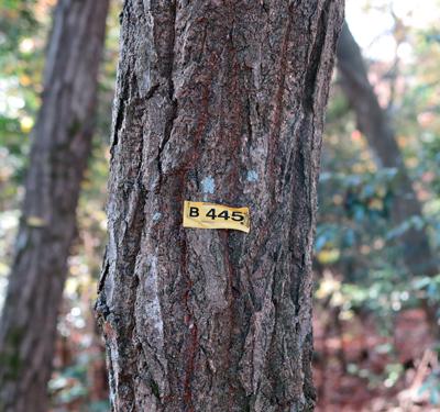 161208番号