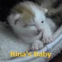 リーナ仔猫
