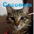 Coconora.jpg