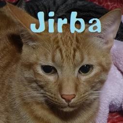 Jirba.jpg