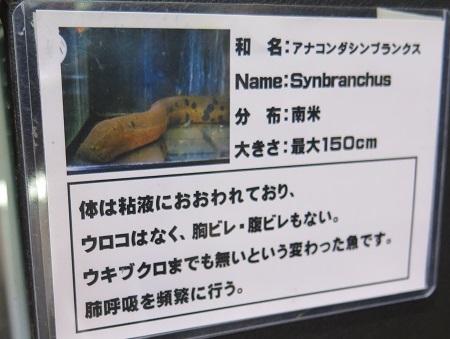 うなぎまつり うなぎ水族館 シンブランクス