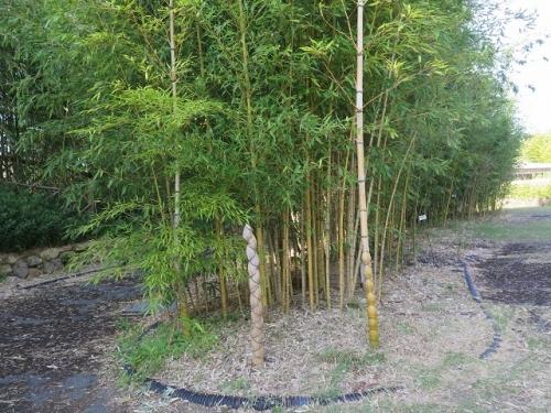 ガーデンパーク 亀甲竹