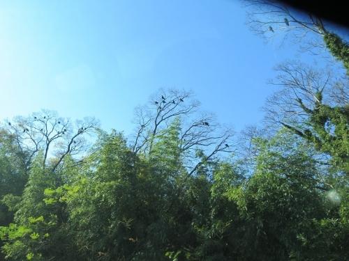 揖斐川 鳥のコロニー