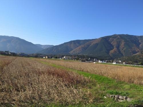揖斐川近くの大豆畑