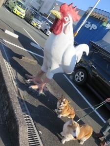 にわとりと犬