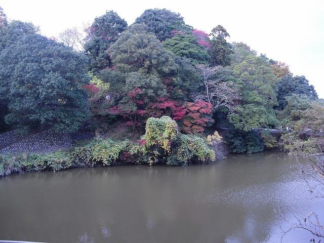 紅葉亀山公園CIMG3177