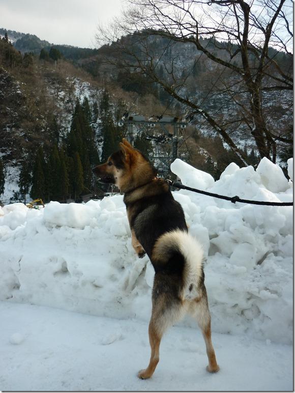 201701日帰り雪遊び02-02
