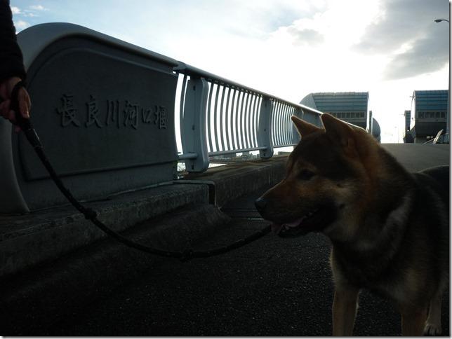 201701長良川河口堰-21