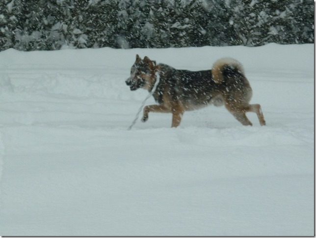 20170115雪遊び02-03