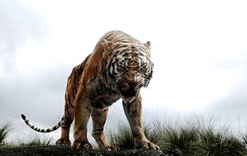 ジャングル04