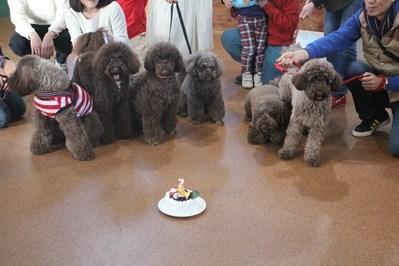 ドゥードル 誕生日会