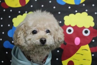 犬太郎くん