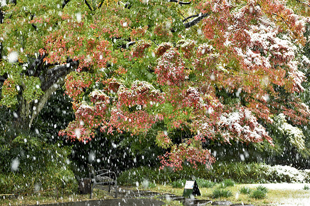 54年ぶりの11月の初雪