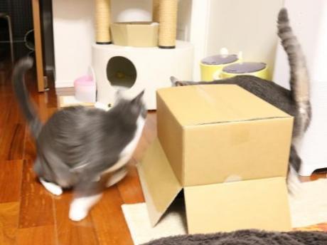 箱の陰からしかえし・・・