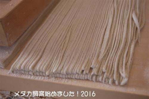 P1120999.jpg