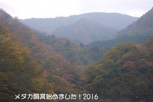 P1130036.jpg