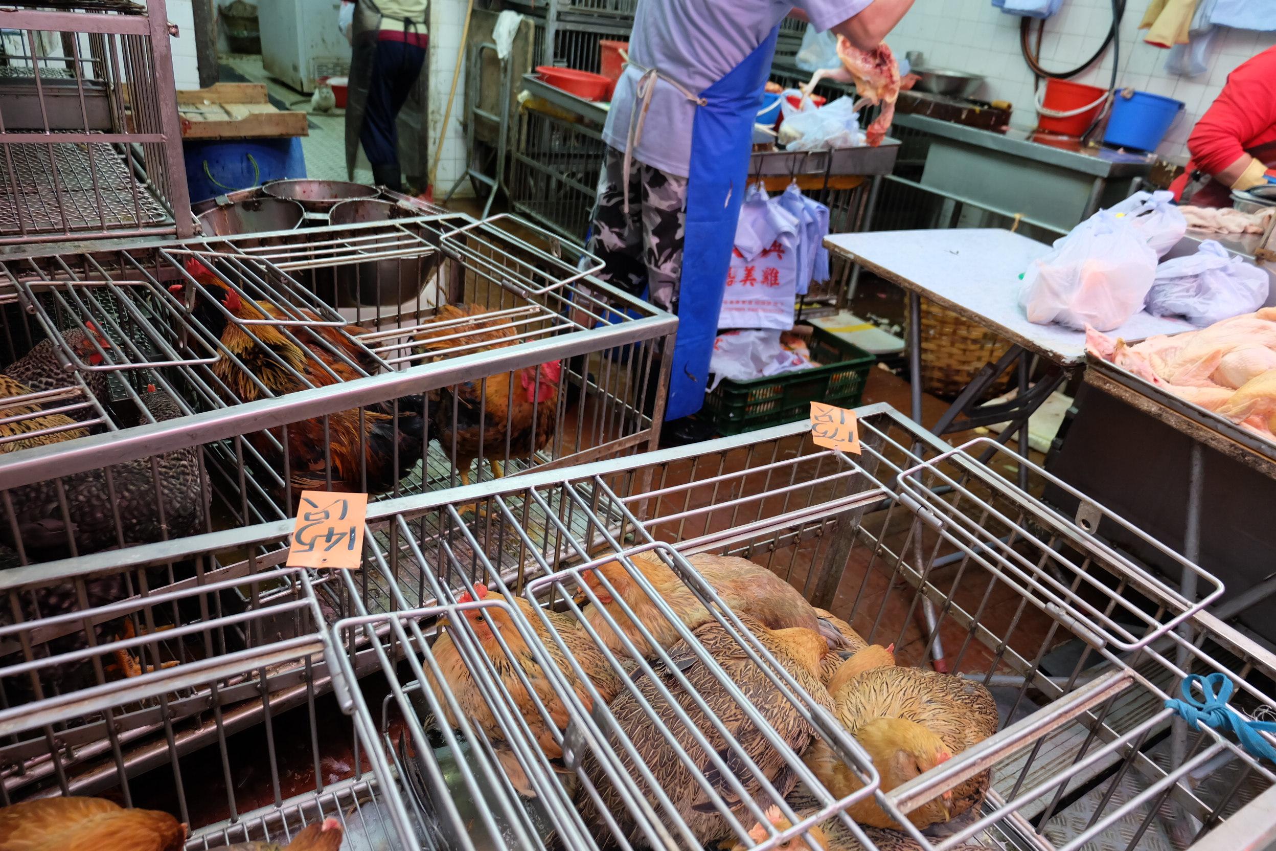 市場の鶏01