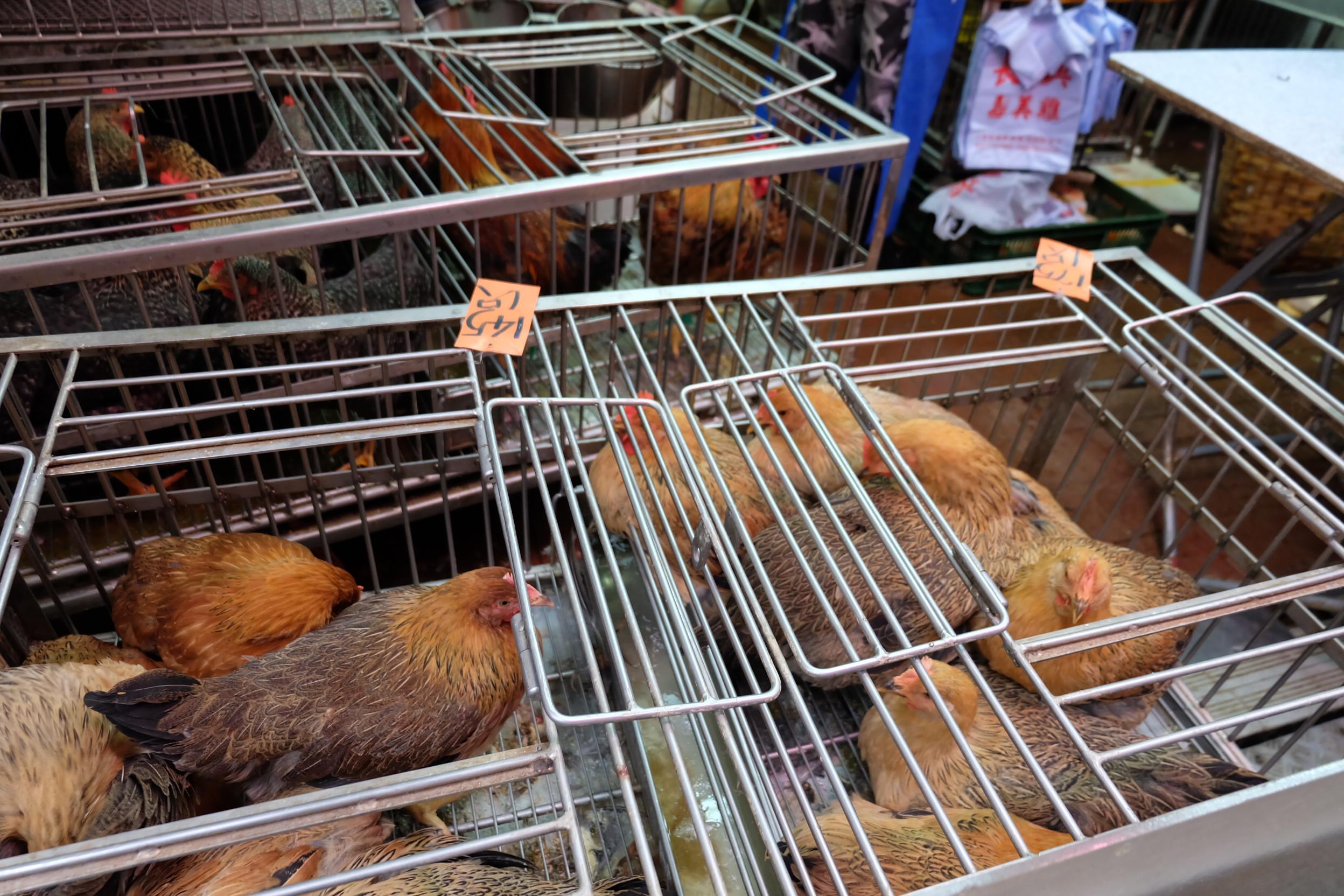 市場の鶏02