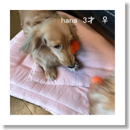 hana20170120.jpg