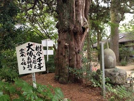 8042015 46番浄瑠璃寺S3