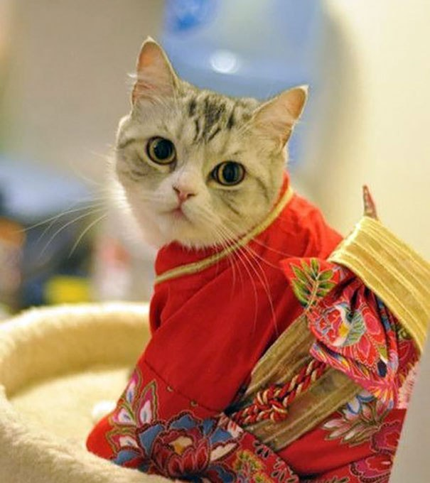 cat-kimonos-japan-20__605.jpg