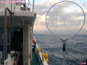 2016-12-29船でアマダイ (2)