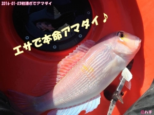 2016-01-03初漕ぎでアマダイ (10)
