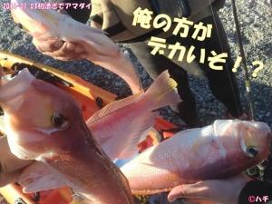 2016-01-03初漕ぎでアマダイ (16)