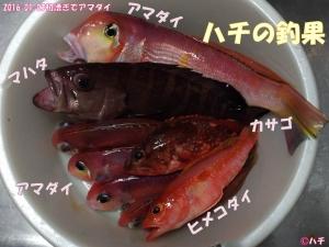 2016-01-03初漕ぎでアマダイ (18)