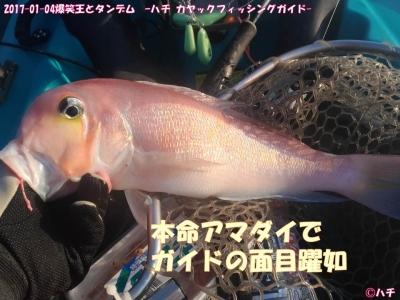 2017-01-04爆笑王とタンデム –ハチ カヤックフィッシングガイド- (3)