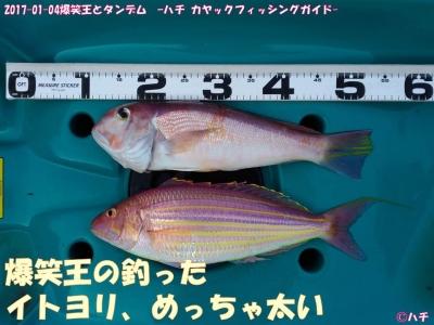 2017-01-04爆笑王とタンデム –ハチ カヤックフィッシングガイド- (12)