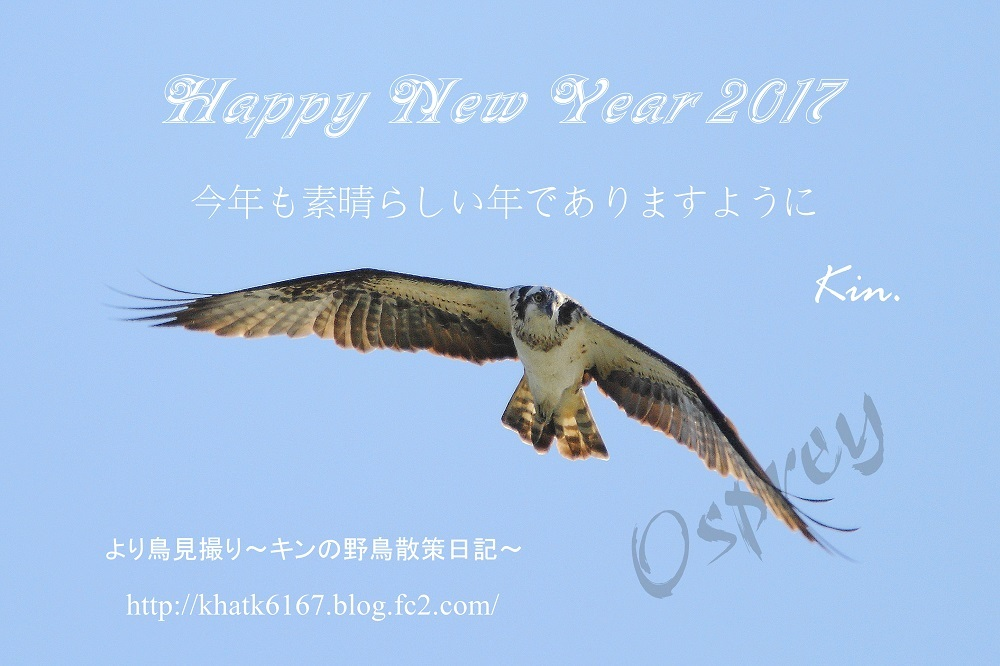IMG_2017-01-01-1.jpg
