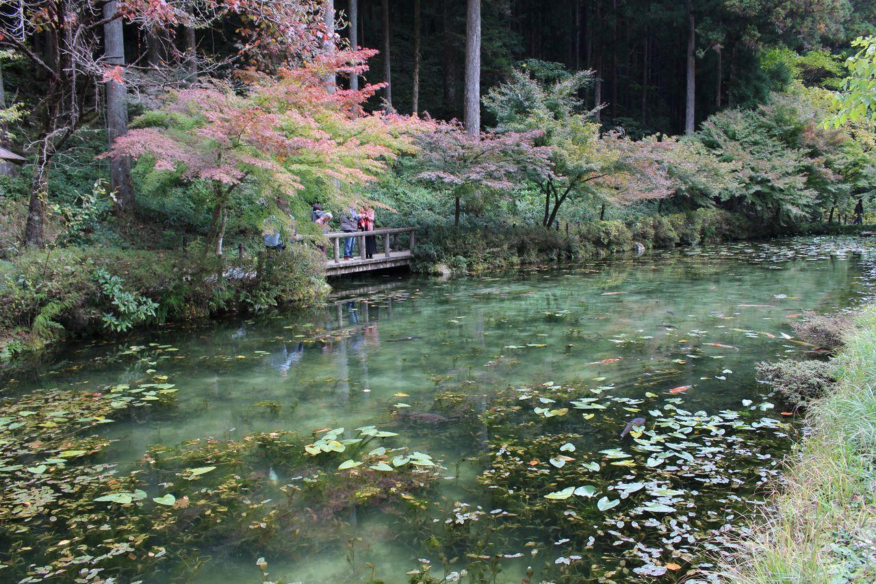 モネの池-3