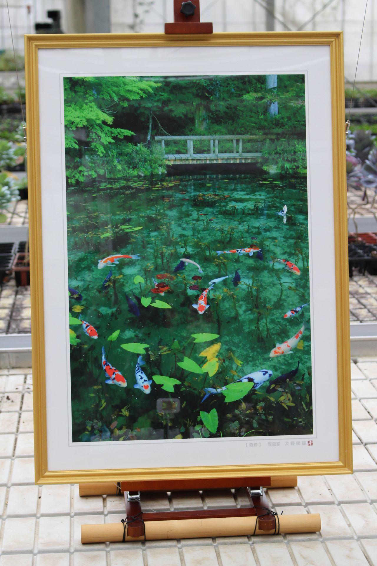 モネの池-11