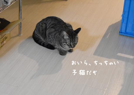 ☆DSC_0721 (1E)thum