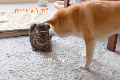 ☆DSC_0465 (2E)thum