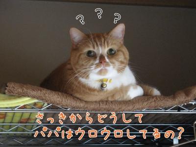 20161127-122053-01.jpg