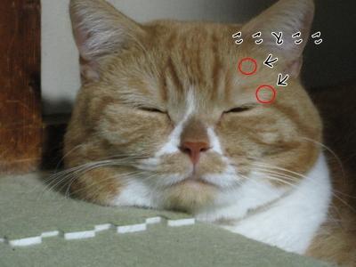 アレルギー図-01