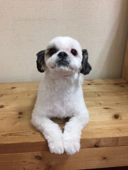 29.1.15あずきちゃん