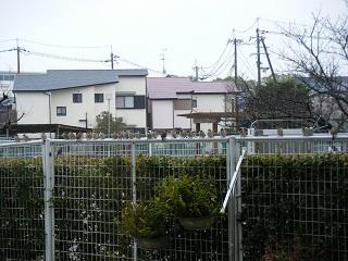 mizore2-2.jpg