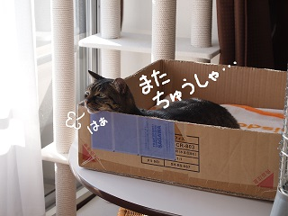 rinpa4-2.jpg