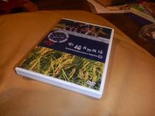 自然農稲つくり (2)