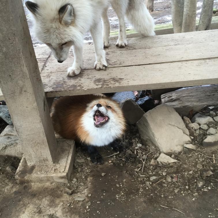 fox134.jpg