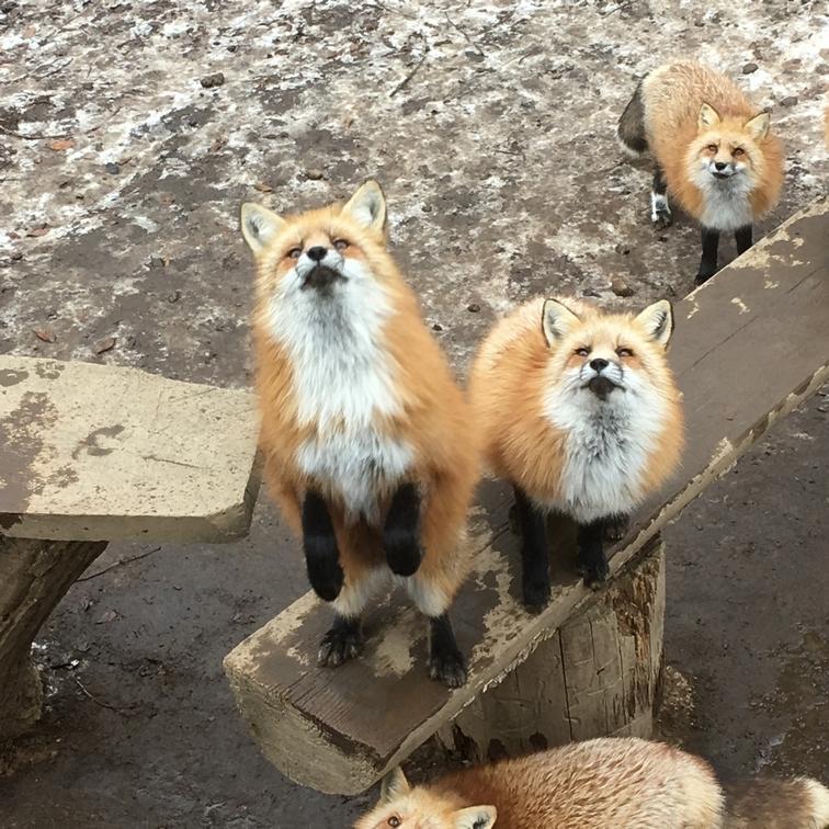 fox182.jpg