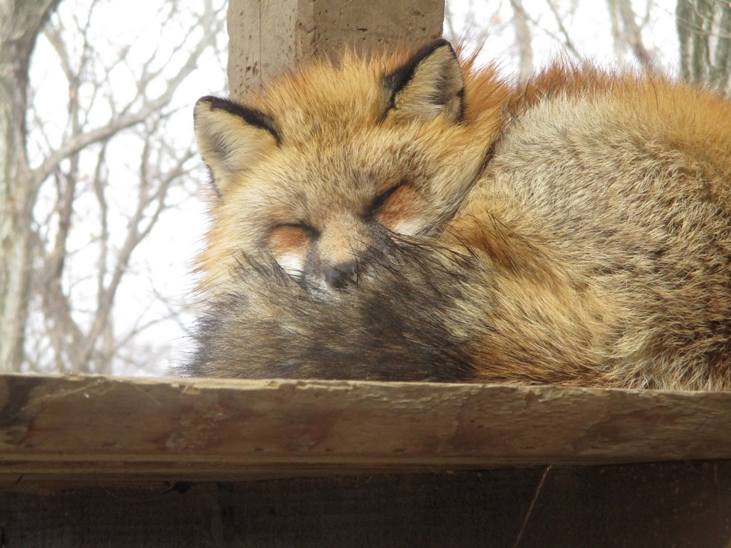 fox186.jpg